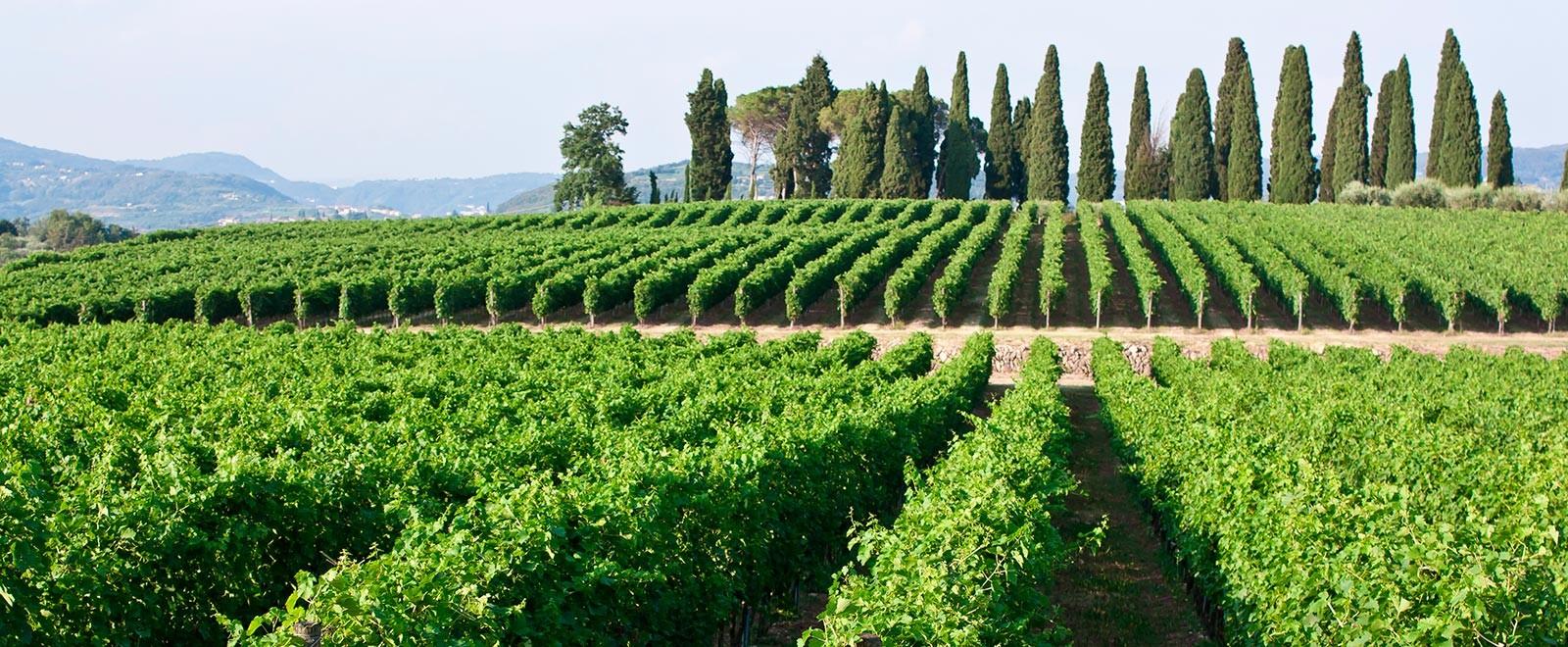 vini della valpolicella